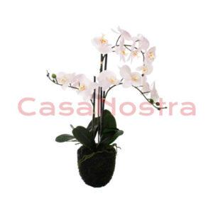 Орхидея в вазе